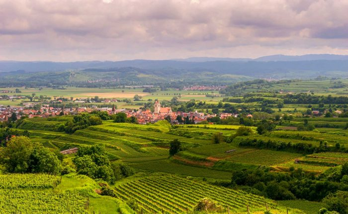 Reiseleitung Kaiserstuhl | Wine regions of Germany